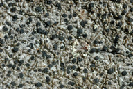 Buellia schaereri