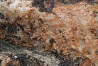 Ionaspis cyanocarpa