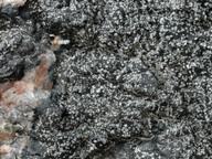 Rinodina atrocinerea