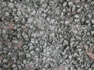 Umbilicaria grisea